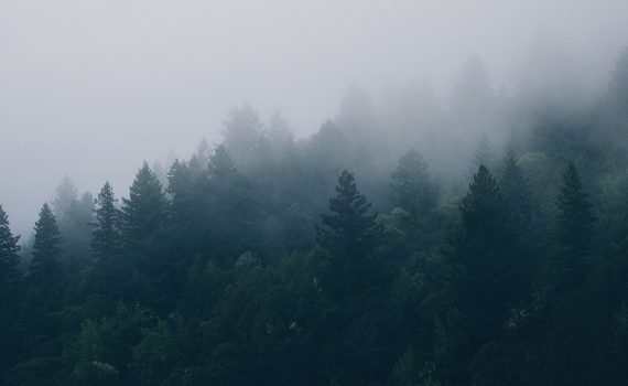 trees_banner